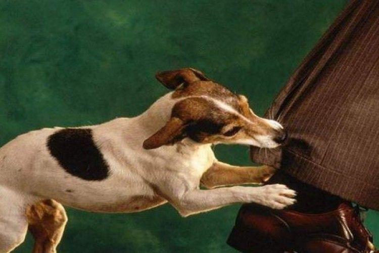 Через скаженого пса у Луцьку райлікарню звернулося 9 осіб