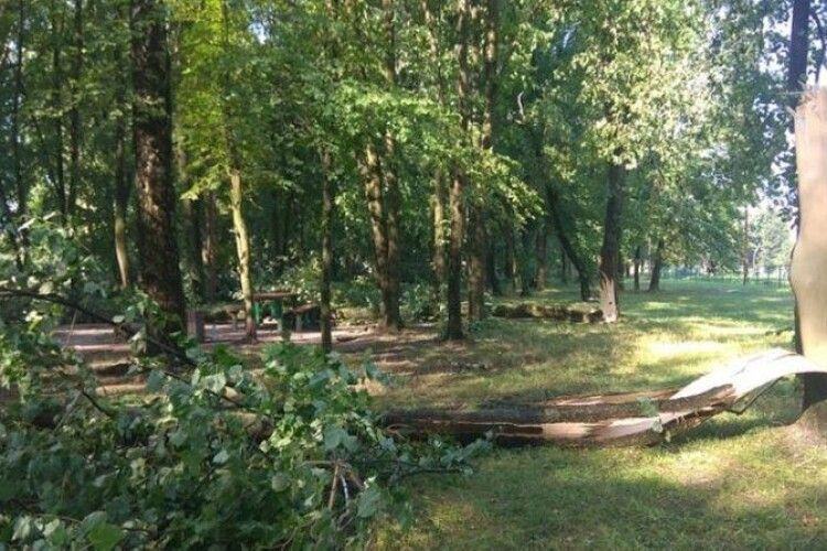 Буревій у Ковельському районі: вирвані дерева та розкриті дахи будинків