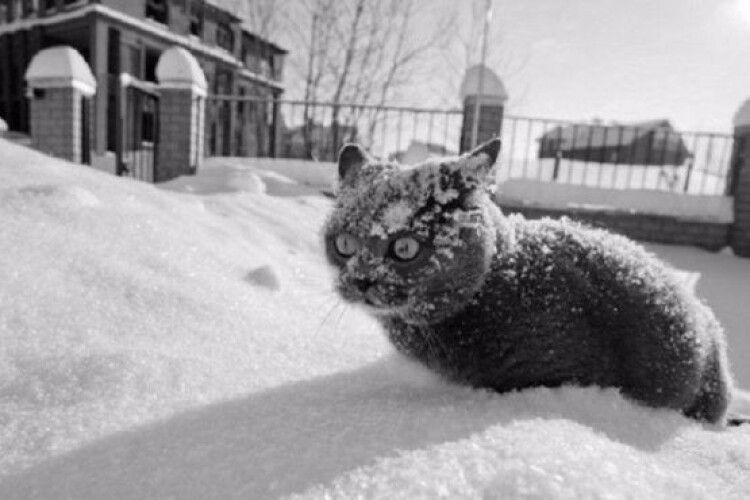 В Україні вдарять триденні заморозки