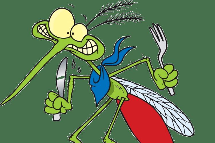 Як здобути перемогу над комарами?