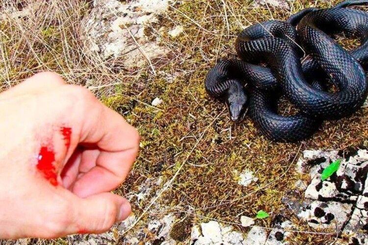 На грибника з Рівненщини напала змія