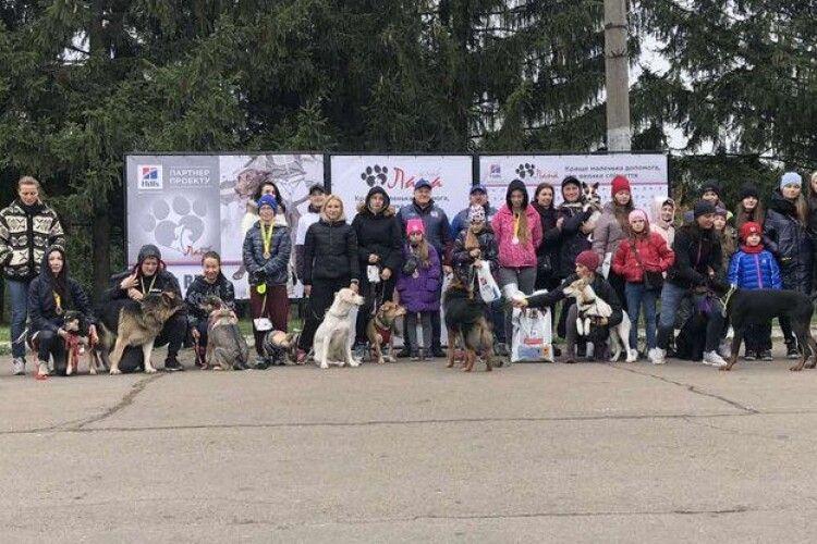 У Рівному благодійний забіг із собаками зібрав 3 тисячі гривень