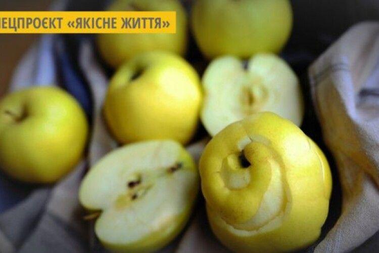 Студенти з Німеччини створили сумки з фруктової шкірки