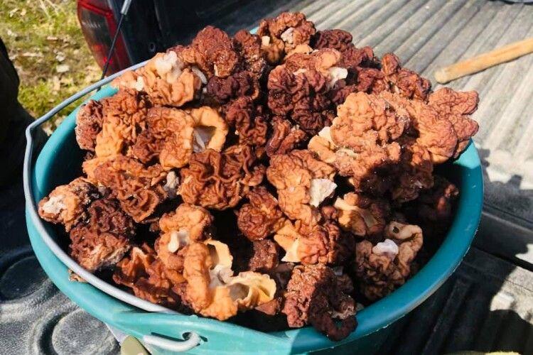 На Рівненщині депутат назбирав кілька ящиків грибів (Фото)