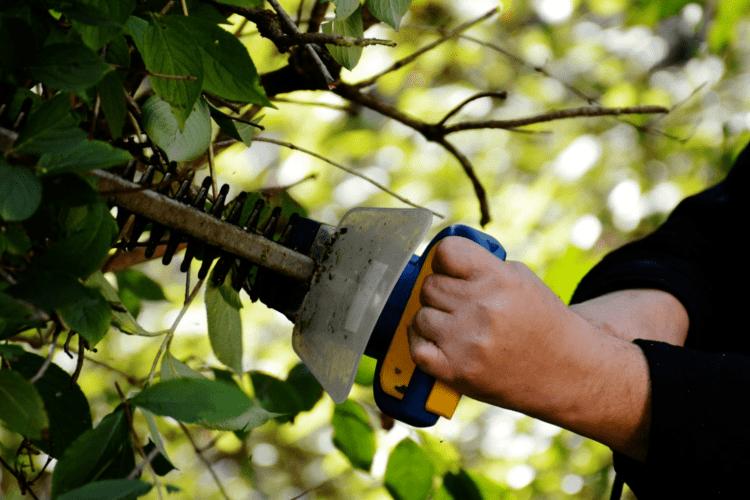 Столична компанія кличе на роботу садівниками волинян