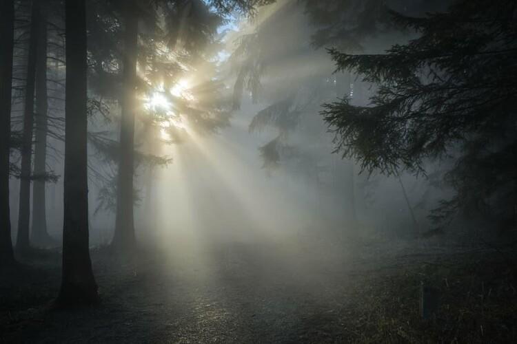 На Волині державі повернули землю лісового фонду вартістю 30 мільйонів гривень