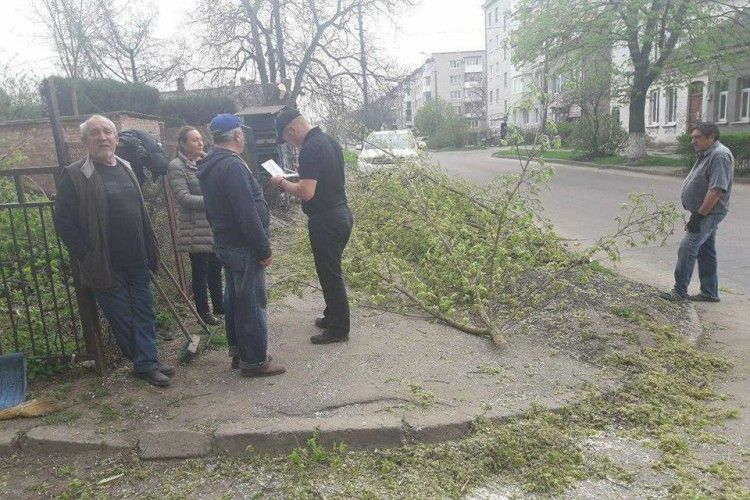 У Луцьку невідомі кронували дерева без відповідних дозволів