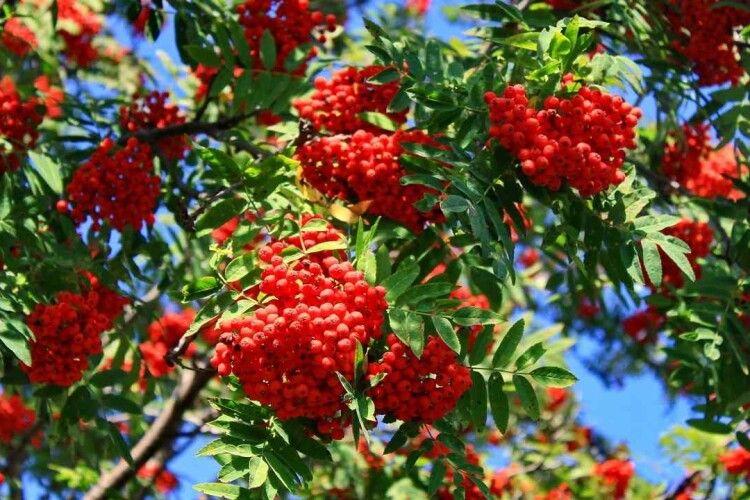 Погода на вівторок, 14 вересня: Симеон з Марфою розкажуть, якою буде осінь