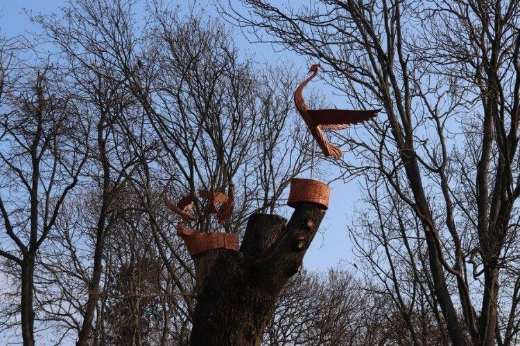У місті на Волині на деревах з'явилися журавлі (Фото)