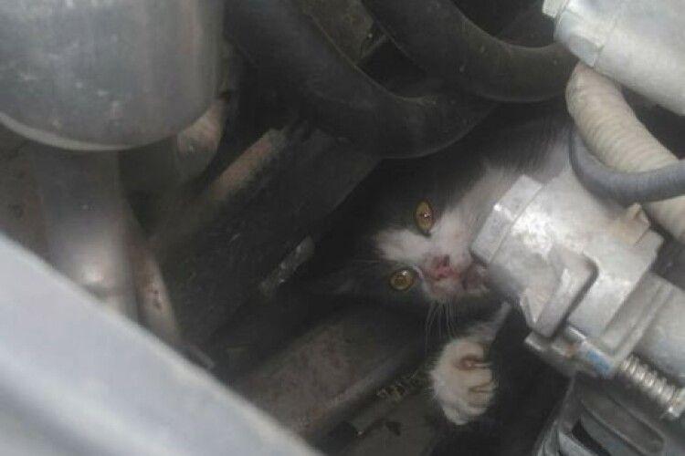 Рятувальники прийшли на допомогу котиську, який застряг у моторному відсіку автомобіля