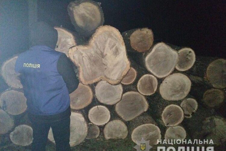 Викрили організовану злочинну банду, яка вирубувала українські ліси: до її складу входили високопоставлені лісівники (Фото)