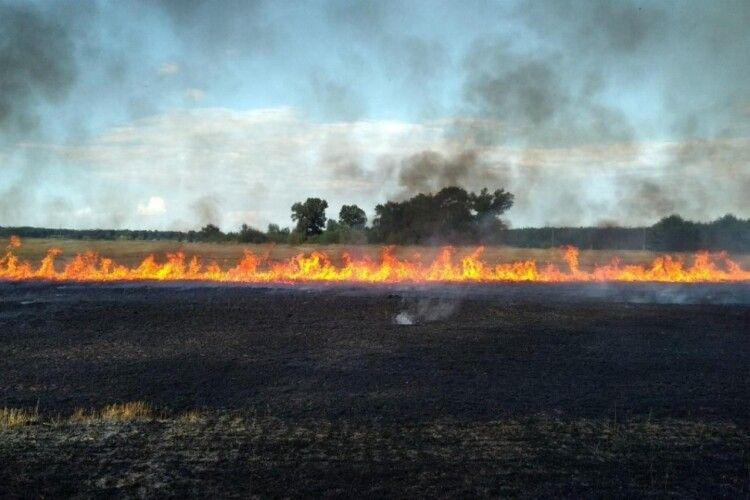 Понад пів сотні волинян оштрафували за спалювання сухої трави