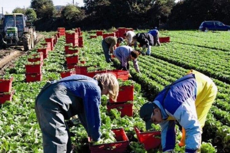 Латвійські фермери терміново потребують українських заробітчан