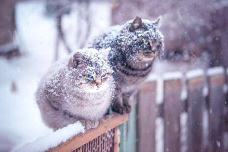 Погода на суботу, 30 січня: на Волині увесь день сніжитиме
