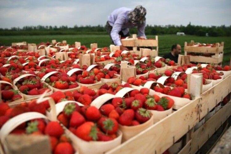 Українських заробітчан обманюють у Польщі: як не стати жертвою шахраїв