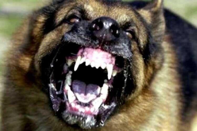 Собаки бувають «кусачими»…
