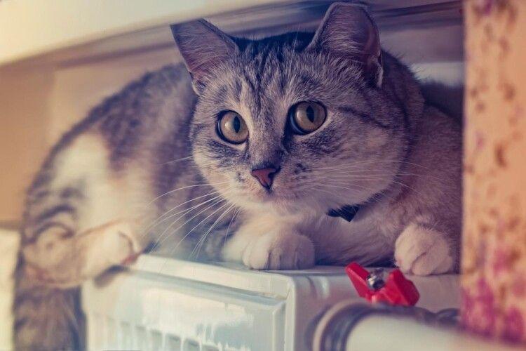 На Одещині злапали недоростка, який відрізав котам лапи і голови