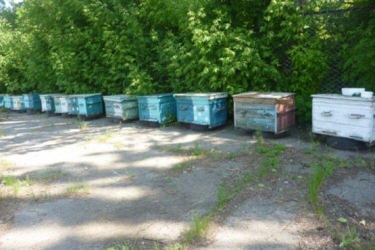 Замість сторожових псів — пильні та злі бджоли!