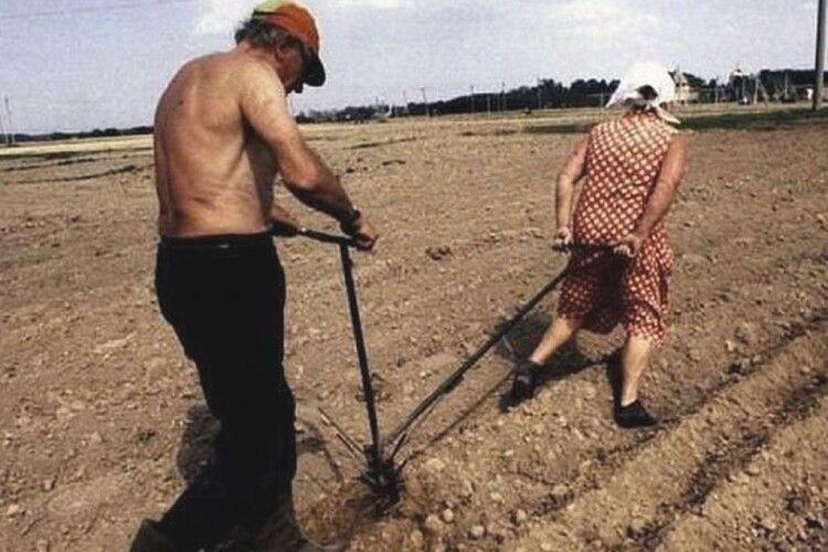 Фермер запряг у плуг жінку, щоб зорати поле (Фото)