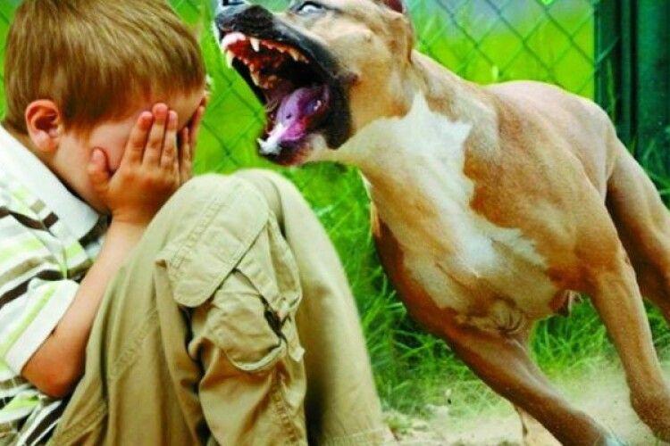 На Волині підтверджено 12 випадків сказу серед тварин