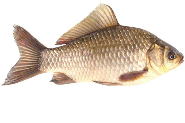 Корисні поради: вибираємо свіжу охолоджену рибу