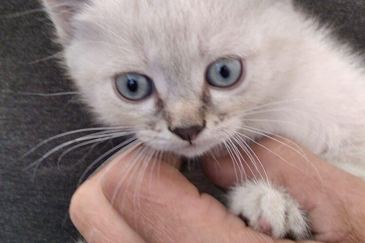 У Луцьку бажає познайомитися молода блакитноока блондинка (Фото)