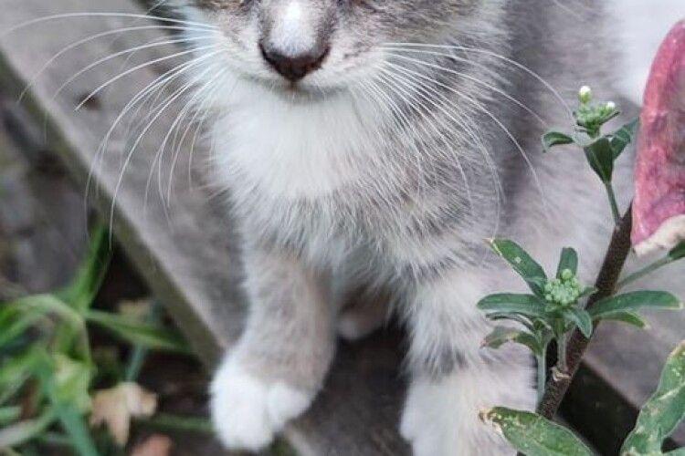 У Луцьку шукають надійних людей для пречудової котодівчинки (Фото)