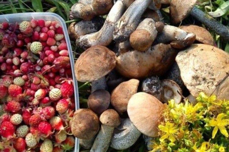 Надходження від заготівлі дарів лісу на Волині - 4 мільйонів гривень