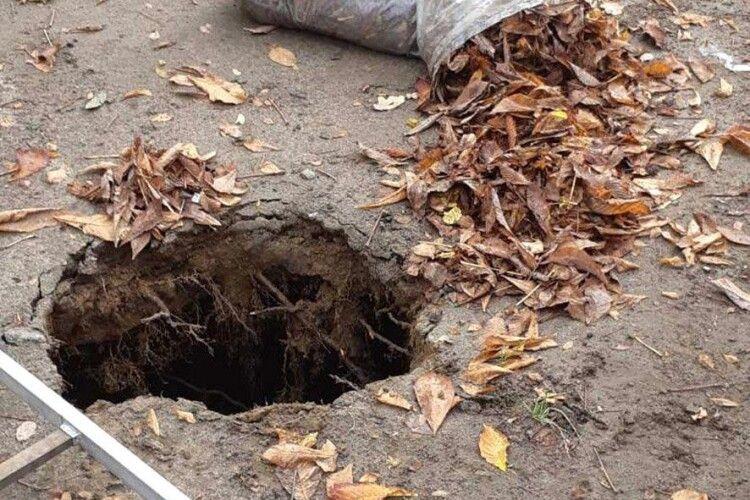 Прибирала листя та провалилася під землю: у Полтаві загинула двірник (Відео)