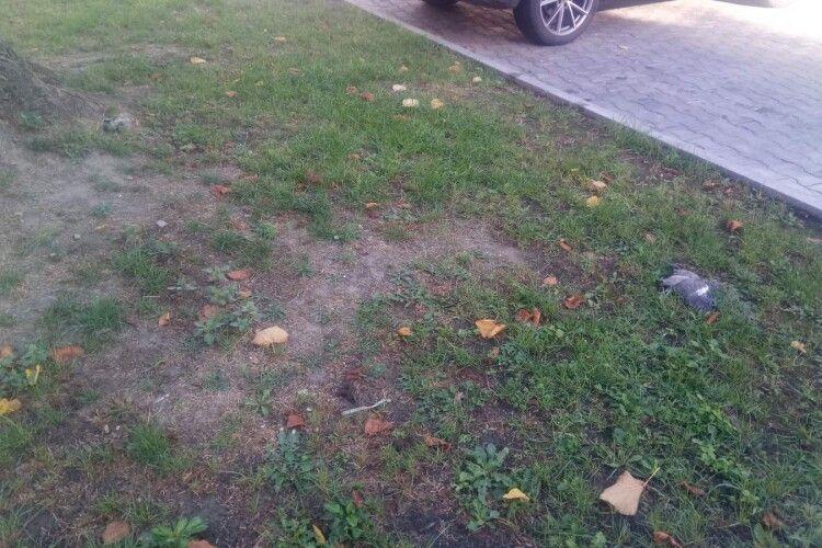 У центрі Луцька масово гинуть голуби