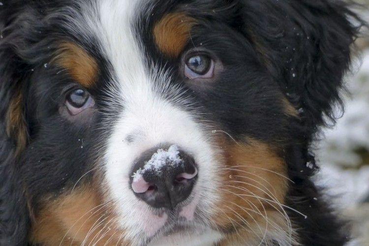 Собача вірність: у США тварина після смерті власниці не хотіла йти із кладовища із новими господарями