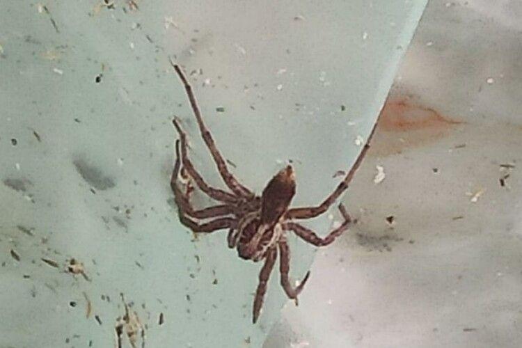 В Україні чоловіку ампутували обидві ноги через укус павука