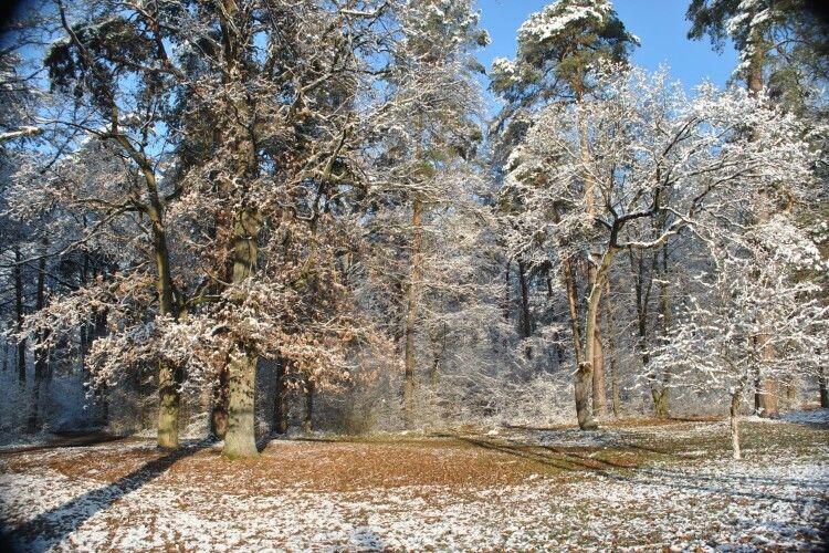 У перший день зими Цуманську пущу атакували рої білих мух (Фото)