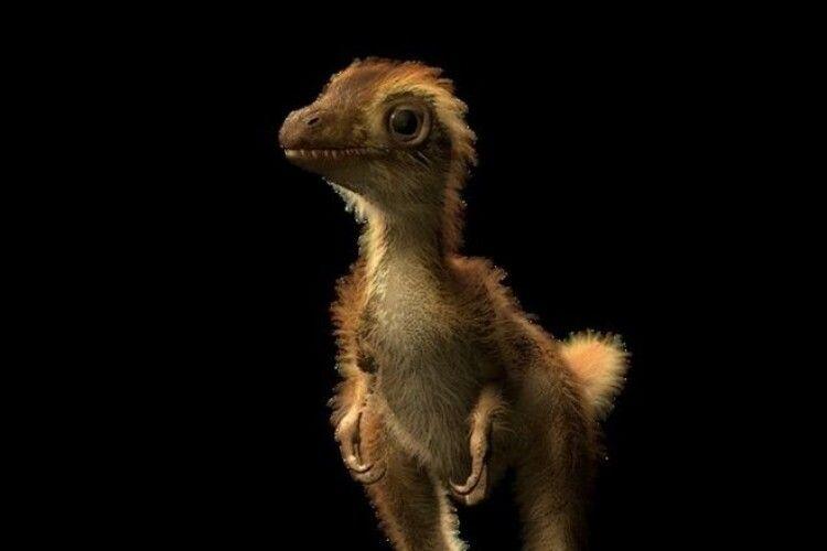 Науковці вперше знайшли скам'янілості дитинчати тиранозавра