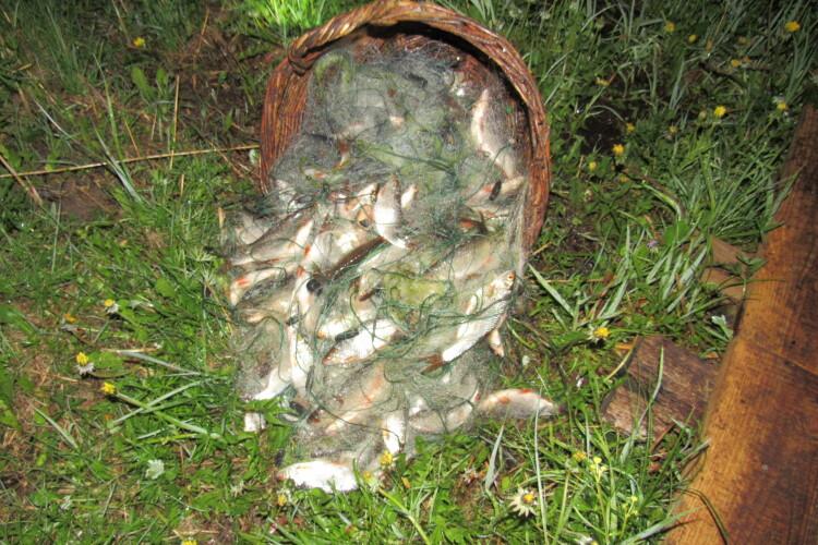 Понад дві сотні рибин спіймали волиняни сіткою. Їм загрожує кримінал (Фото)
