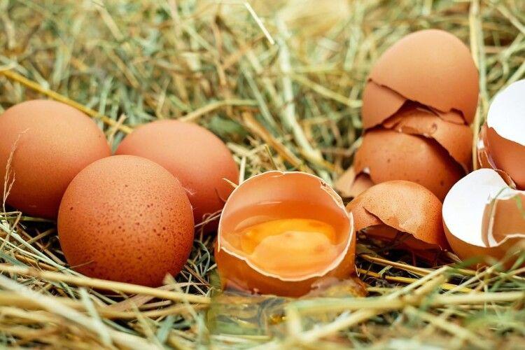 Волинян попереджають: невдовзі курячі яйця стануть «золотими»