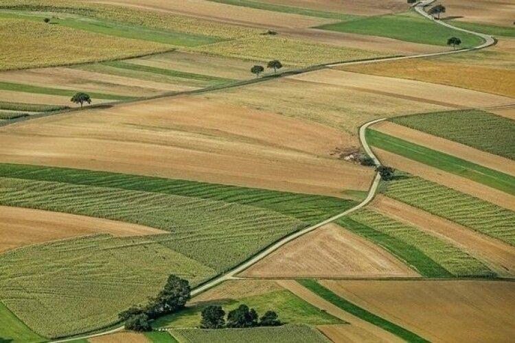 100 днів ринку землі: названо середню ціну гектара