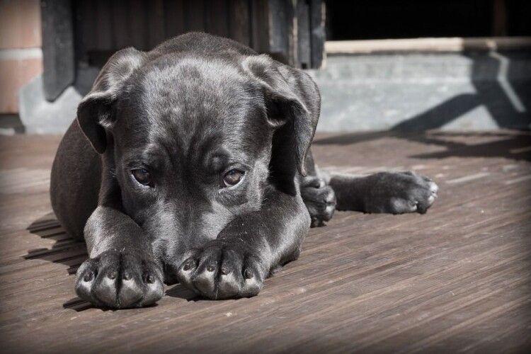 Чоловік викинув собаку з моста