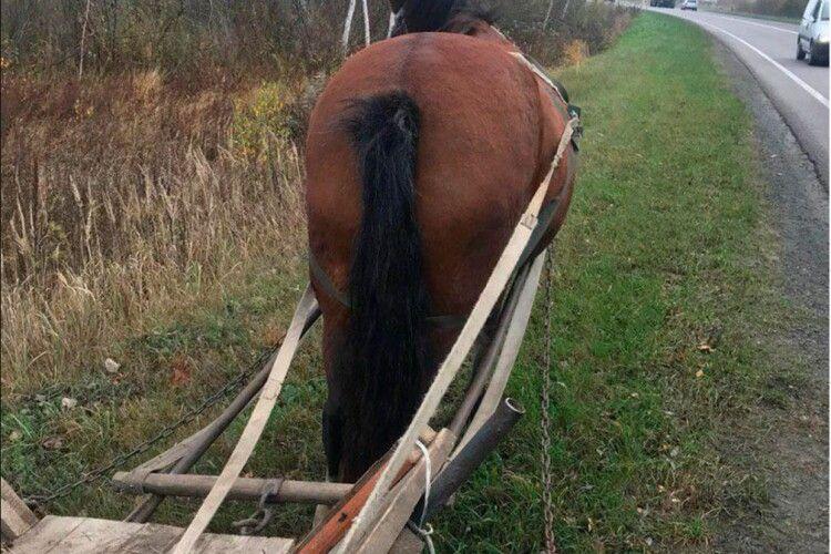 На Волині кінь з возом втік від господаря, поліцейські повернули гнідого в неволю