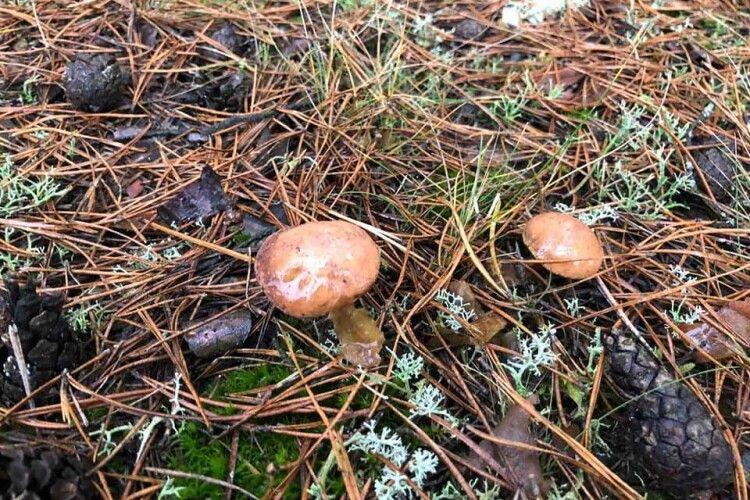 Новорічний дощ порадував... грибами (Фото)