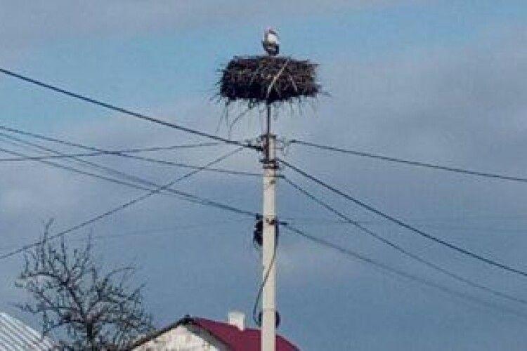 На Любешівщині встановлюють штучні лелечі гнізда