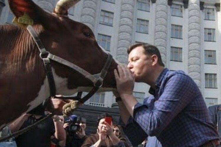 «Начувайтеся, скотиняки!»: Ляшко вже оголосив сам себе переможцем довиборів у Верховну Раду