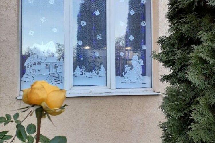 У Рівному перед Новим роком на шкільній клумбі розквітла троянда