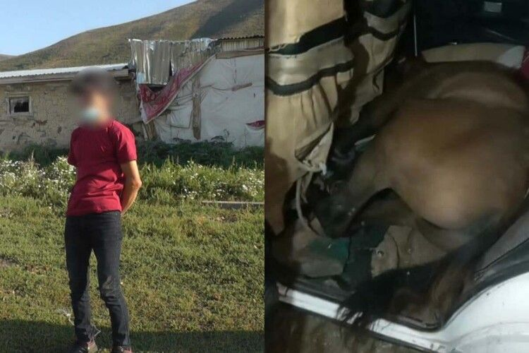 Затримали водія з живим конем у салоні (Відео)