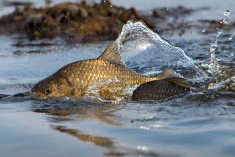 У серпні волиняни 80 разів порушували природоохоронне законодавство