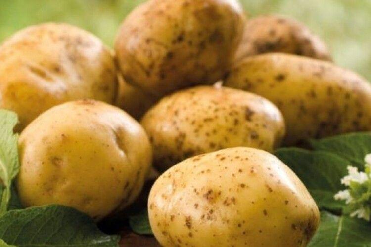 Кому не радять їсти молоду картоплю