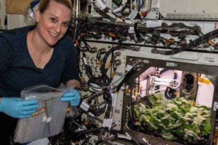Астронавти NASA вперше зібрали в космосі урожай редиски. (ВІДЕО)