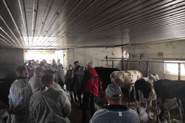 У 900 селянських господарствах Волині утримують майже чотиритисячі корів