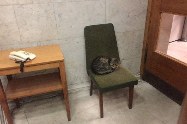 Безпритульний кіт Амбасадор став послом МЗС України