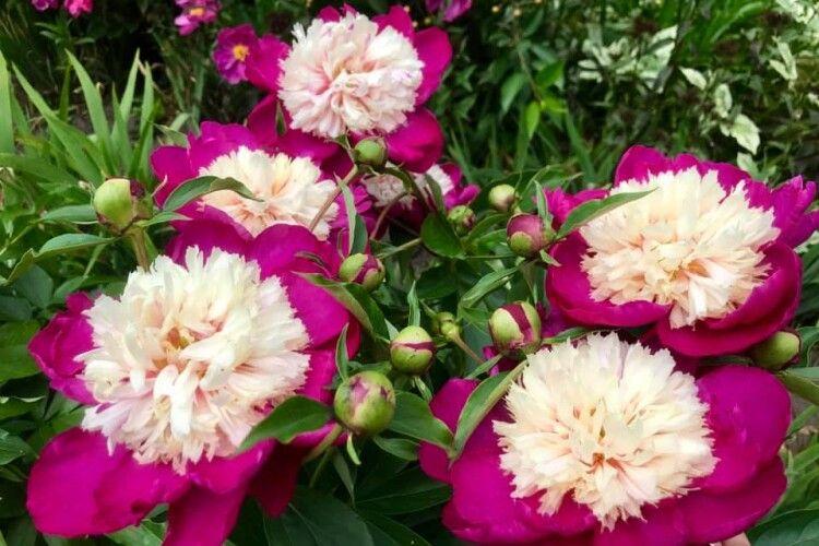 «Квіти, як люди – кожна з характером», - каже колківчанка, яка вирощує їх сотні видів